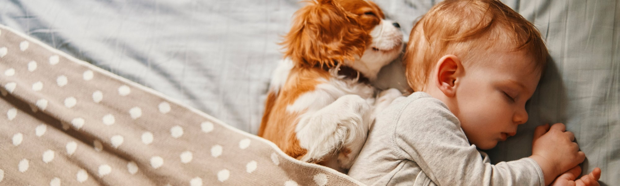 A sleeping baby with dog.